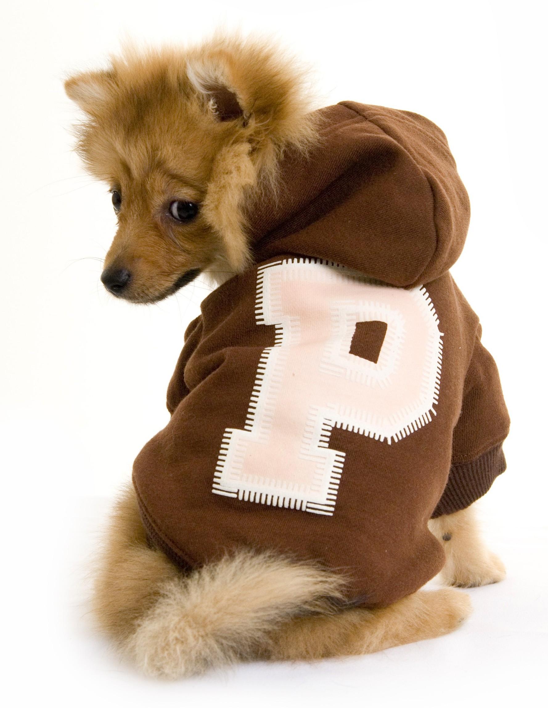 dog jumpers puchi brown dog jumper bjsuubk